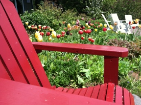 New Scenic Cafe garden
