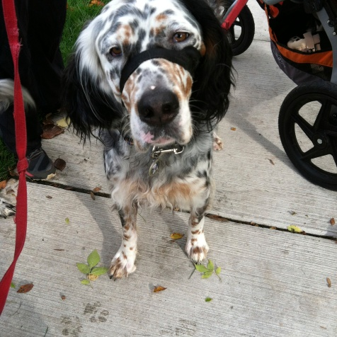 Barley -- the best dog I met today