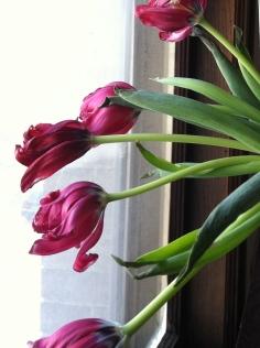 Tulip One