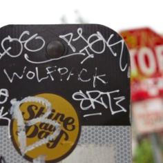 Wolfpack focus