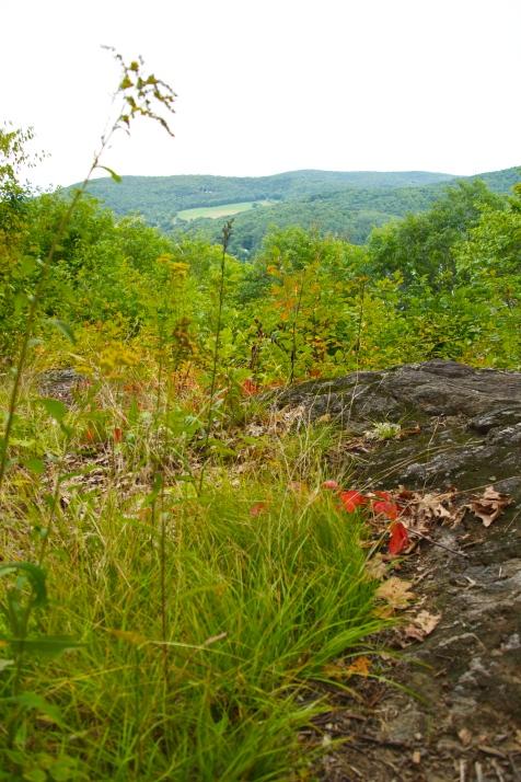 Climb up Mount Tom -- nature