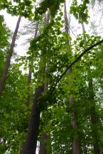 Climb up Mount Tom -- trees