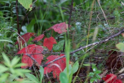 Autumn approaching