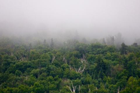 Fog descending