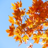 Leaves in sky