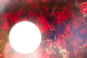 Red leaves , through sunglasses