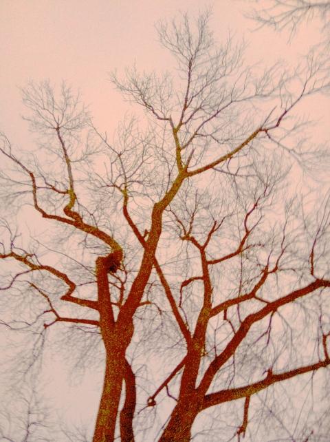 Tree, altered